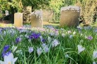 Dolvin Road Cemetery Crocus & Graves