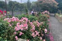 SW in Bloom Rose Walk